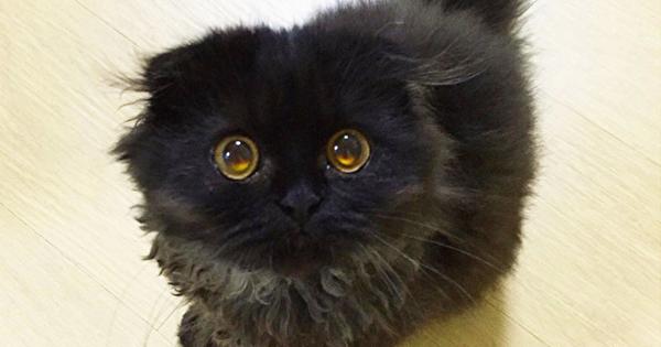 まんまるおめめの黒猫