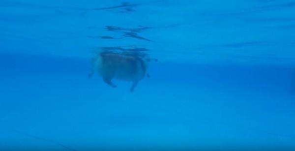 inukaki